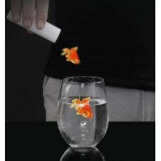 Появление золотой рыбки (напалечник)