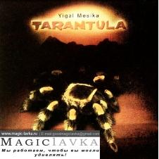 Тарантула - Tarantula by Yigal Mesika
